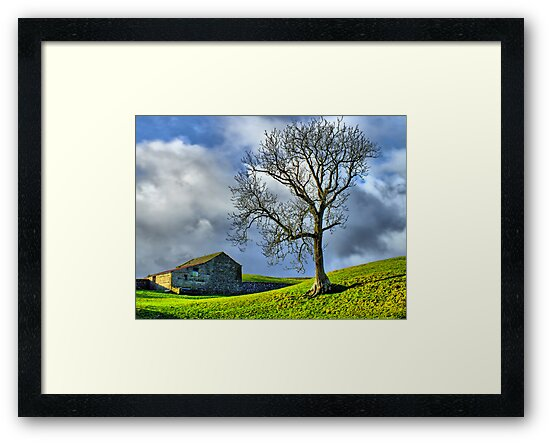Keld Pasture - HDR by Colin  Williams Photography
