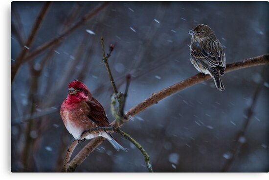 WINTER STORM by Sandy Stewart