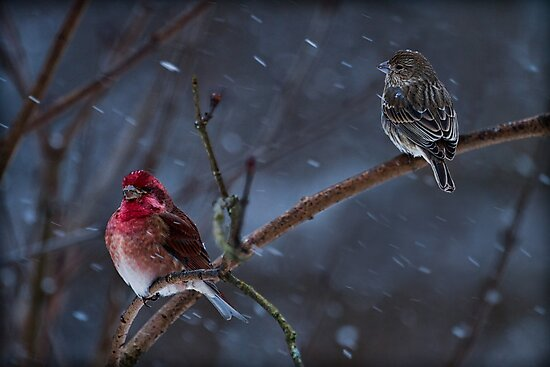 WINTER STORM by Sandy Hill