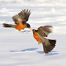 Kiss and fly by Alinka
