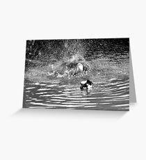 Splash Down Duck Greeting Card