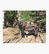 """Donkey at the River Cuale - Burro cerca del Rio Cuale: """"And  I'm waiting and waiting and waiting for him...Like always!"""" Photographic Print"""