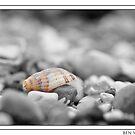 Shell amongst stones colour pop by Ben  Warren