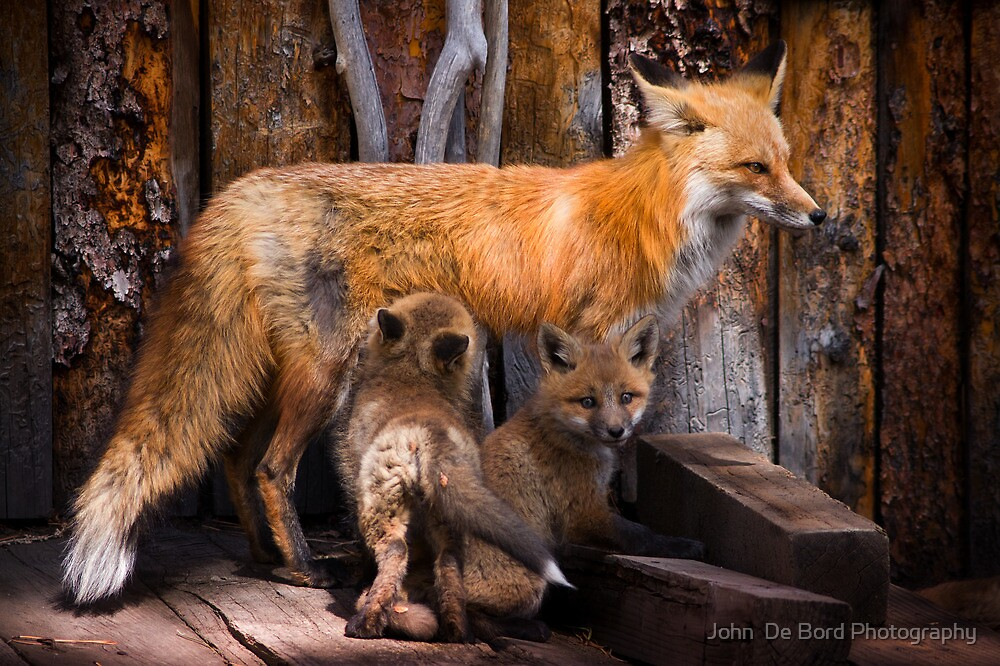 Nursing The Pups by John  De Bord Photography