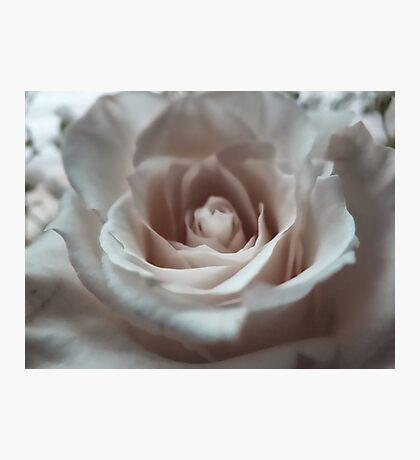 A rose is a rose is a rose Fotodruck