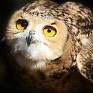 Eagle Owl by Paulette1021