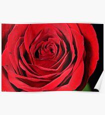 Red Rose - Macro Poster