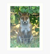 I spy a fox Art Print