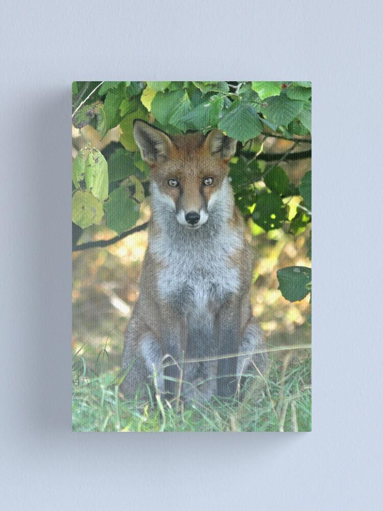 Alternate view of I spy a fox Canvas Print