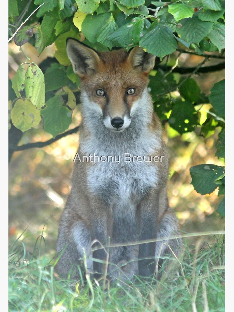 I spy a fox by dailyanimals