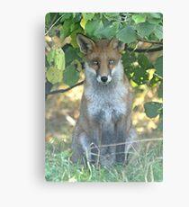 I spy a fox Metal Print