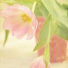Tulips in a Heart Bucket by Linda Trine