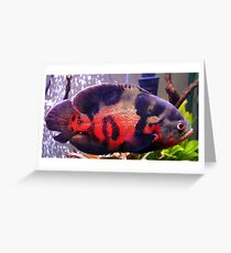 Oscar, but not the grouch....the cichlid Greeting Card