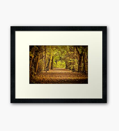 High Elms Woodland walk Framed Print