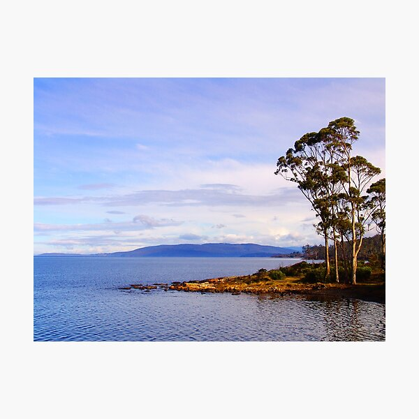 Trees by the coast Photographic Print