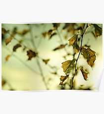 Autumn Leaves.... Poster