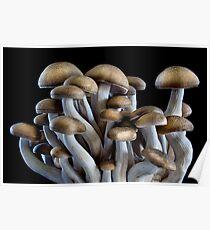 Brown Beech Mushrooms Poster