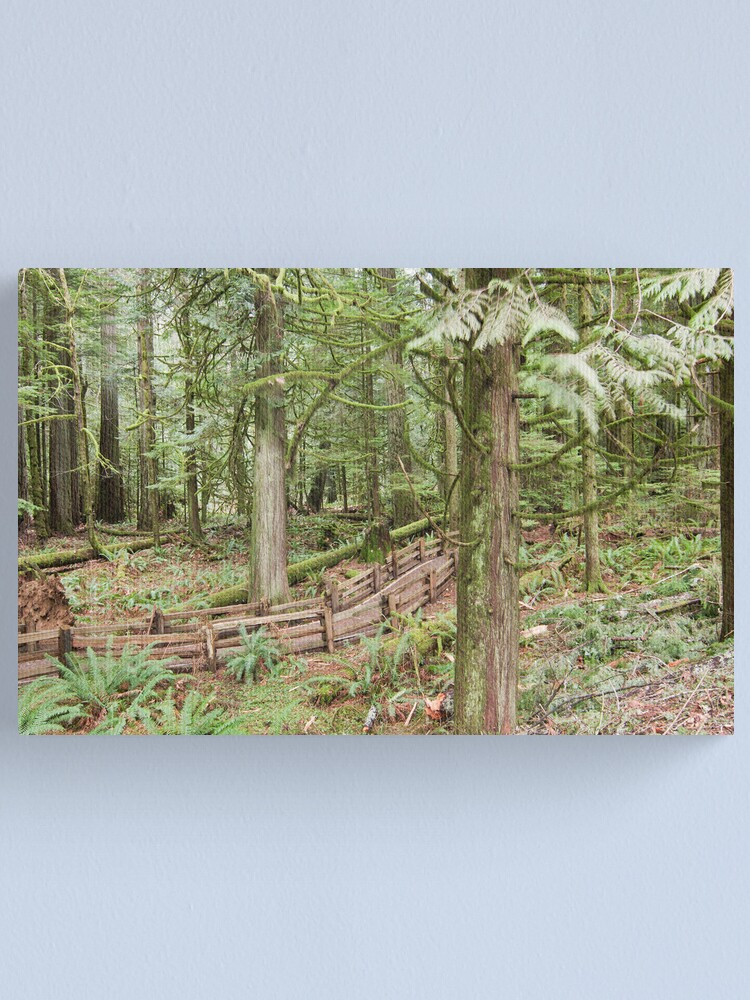 Alternate view of Cathedral Grove Canvas Print