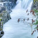 Little Qualicum Falls by Tracy Riddell