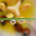 A drop of ladybirds by Yool
