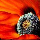 Poppy heaven ! by LorusMaver