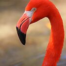 Flamingo Profile by naturalnomad