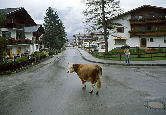 Lost cow, Austria, 1980s. by David A. L. Davies
