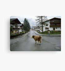 Lost cow, Austria, 1980s. Canvas Print