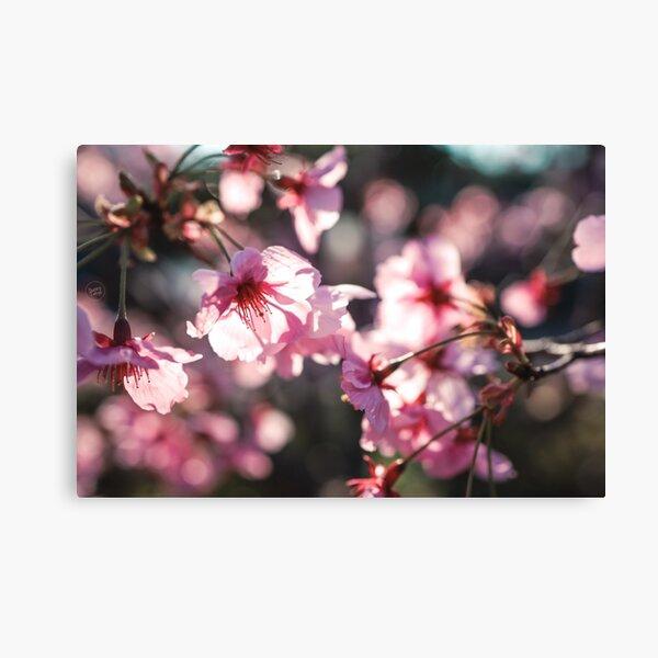Pink Sakura, Tokyo 2020 Canvas Print