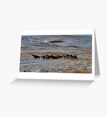 Wild horses on the run up on the Ridge Greeting Card