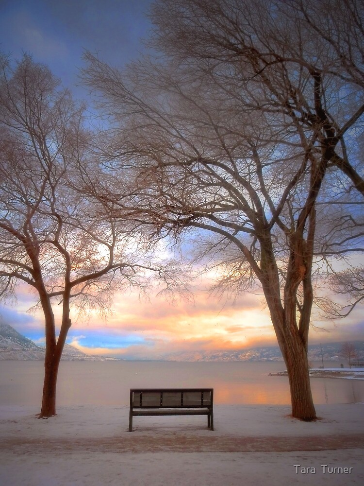 The Bench in the Winter by Tara  Turner