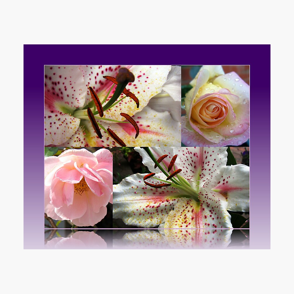 Roses and Lilies Collage in Reflection Frame Fotodruck