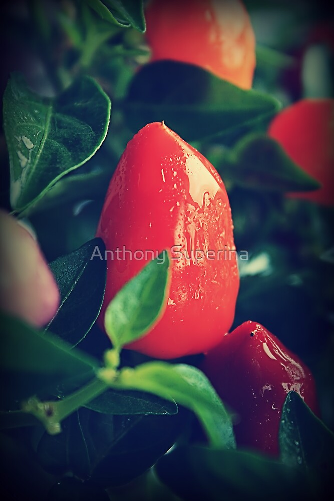 Chilli or Two by Anthony Superina
