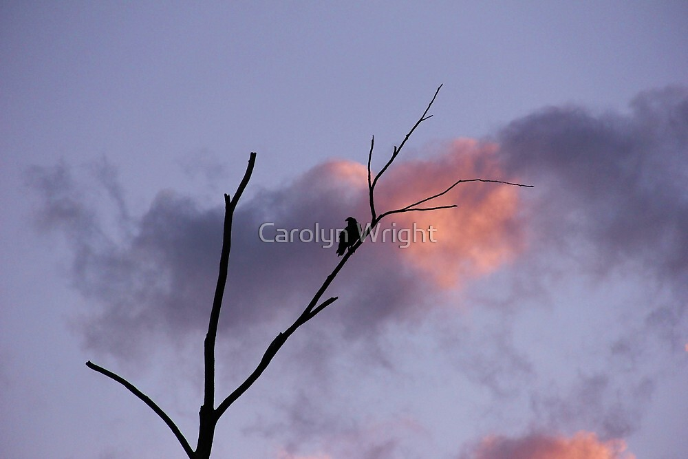 Lonely Dawn by Carolyn Wright