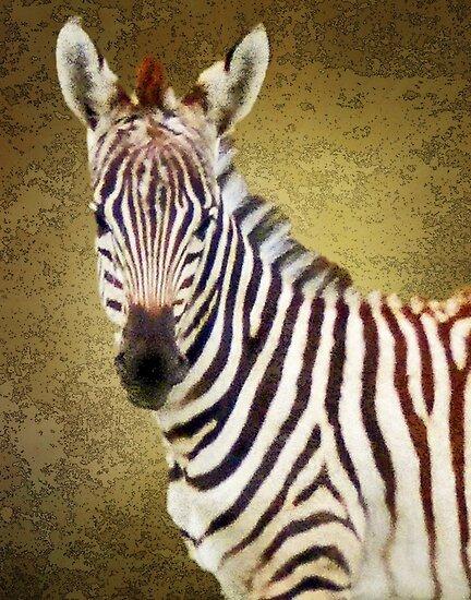 baby zebra by Linda Sparks