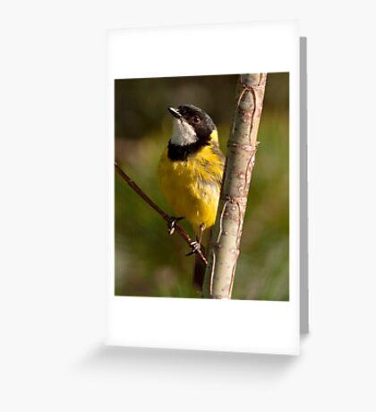 """""""Golden Whistler"""" Greeting Card"""