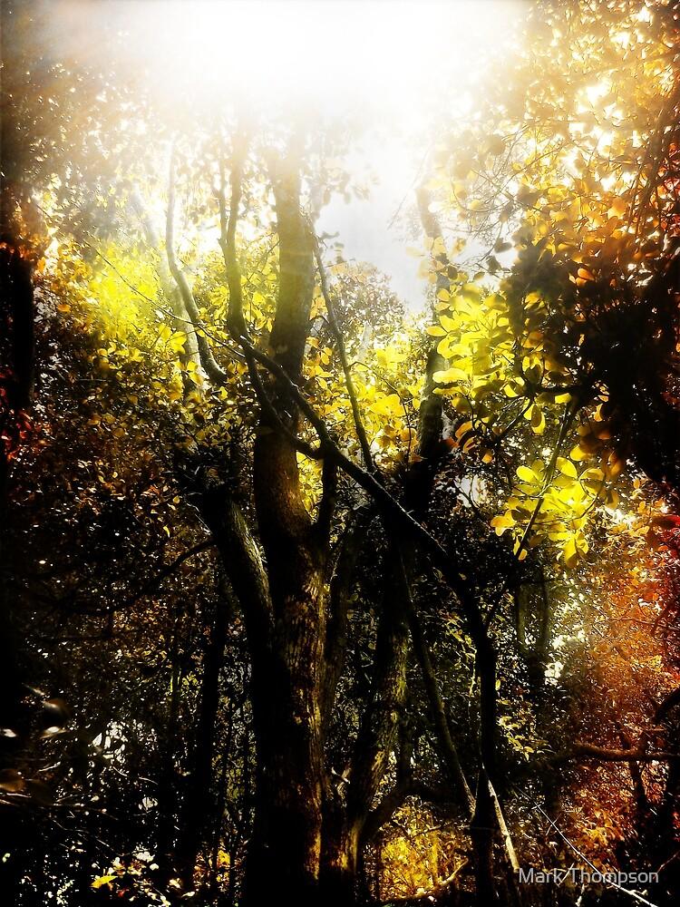 Spiral light by mark thompson