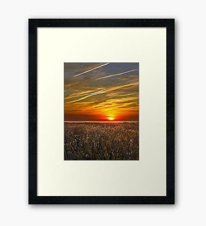 Sunrise over seedheads Framed Print