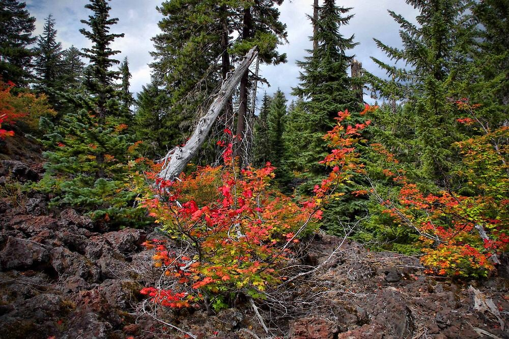 Fall On The Santiam Pass by Charles & Patricia   Harkins ~ Picture Oregon