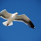 Watch the birdie by Peter Dickinson