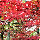 Autumn Red - Great Smoky Mountains National Park, North Carolina by Jason Heritage