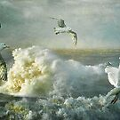 Herring Gulls on The Mersey by Brian Tarr