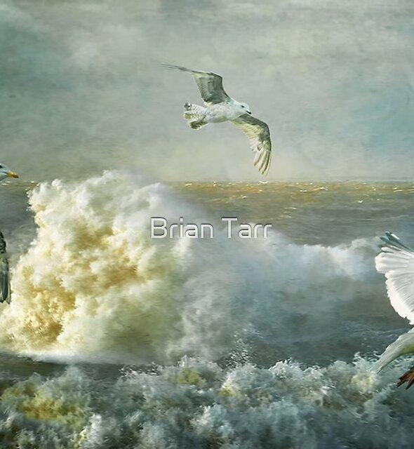 Herring Gulls on The Mersey by Brian Tarr