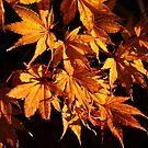 Autumns Glory by Mattie Bryant