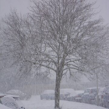 Tree covered in Snow by AfroSmurfs