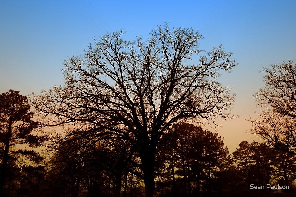 Desolate Sunset by Sean Paulson