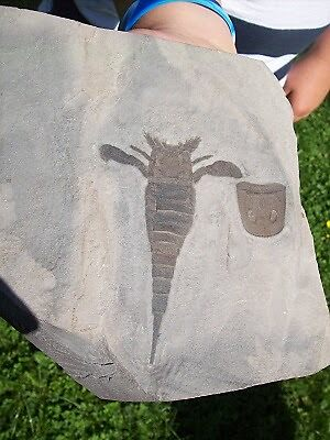 Eurypterid Fossil Scorpion by Fossilhuntress