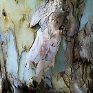 Another creature in the bark of another tree. by ronsphotos