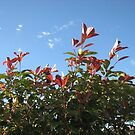 The Upward Reach - Autumn Leaves against Blue Sky by BlueMoonRose