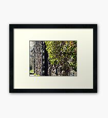 Harsimus Branch Embankment, Abandoned Pennsylvania Railroad Embankment, Jersey City, New Jersey Framed Print